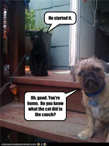 cat couch good gossip home human puppy tattle tale tattling telling terrier whatbreed - 4296843008