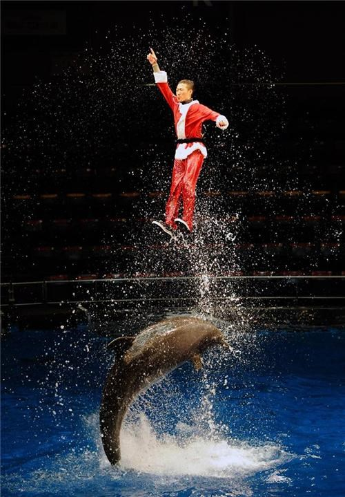 awesome dolphin FTW stunt