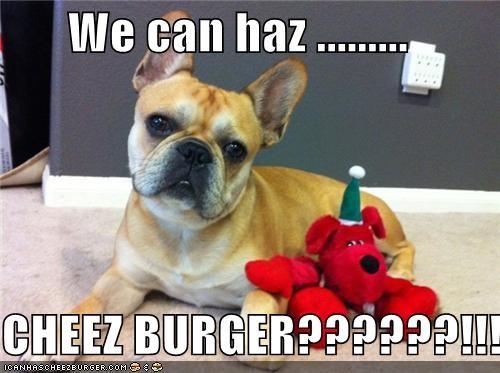 Cheezburger Image 4297672192