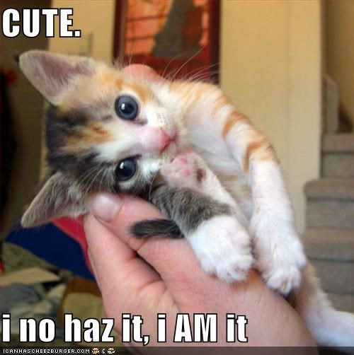 CUTE.  i no haz it, i AM it