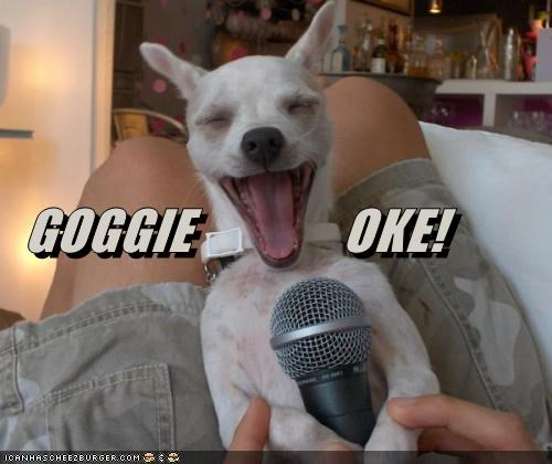 chihuahua fun game karaoke microphone past time sing singing song - 4297900544