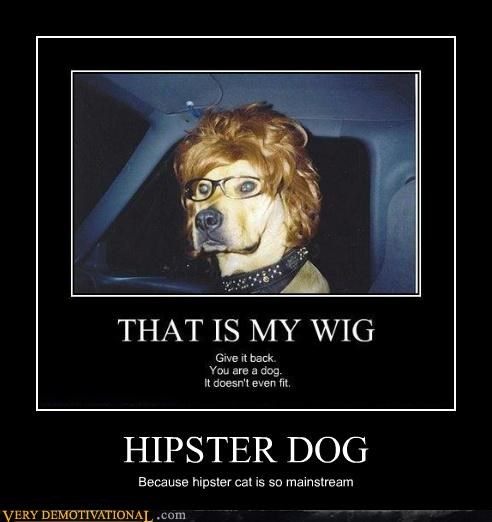 HIPSTER DOG Because hipster cat is so mainstream