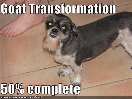 50 percent complete goat Hall of Fame progress shaved terrier transformation whatbreed