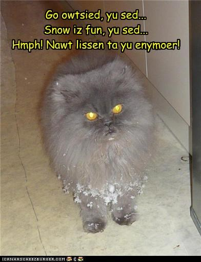 betrayed caption captioned cat cold displeased do not want fun human lies snow trickery trust truth unhappy upset