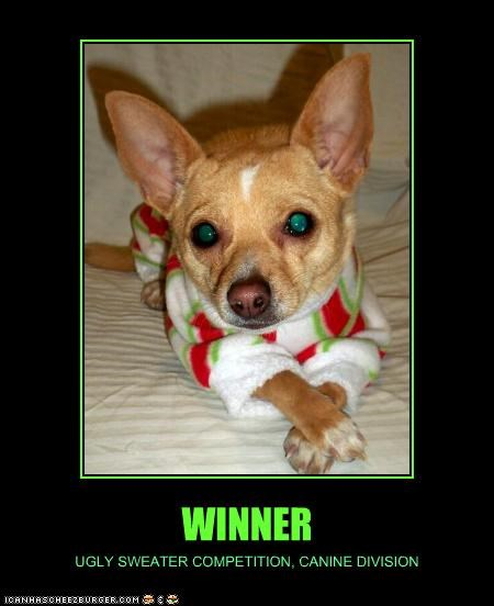 canine chihuahua competition division posing sweater ugly winner - 4298966528