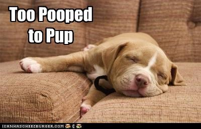 Too Pooped to Pup
