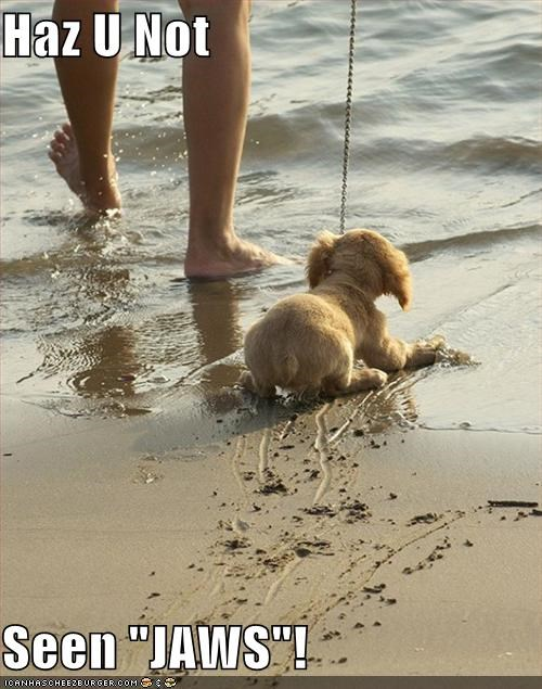 afraid beach do not want jaws leash ocean puppy resistence resisting whatbreed - 4299148288