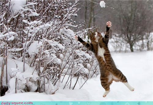 cat cute face jump kitten - 4299654912