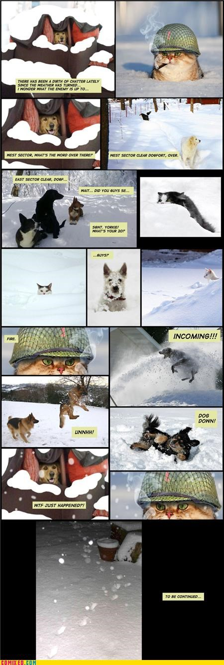 ambush animals Cats Dog Fort drama snow the internets - 4299912448