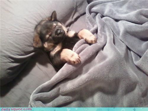 cute puppy sleep sleepy - 4299956736
