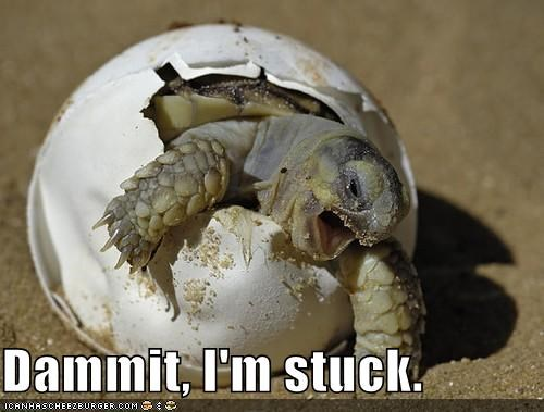 baby,beach,critters,egg,stuck,turtle