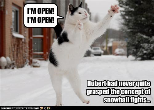 caption captioned cat catch concept FAIL fight im-open never snowball snowball fight understand understanding - 4300718848