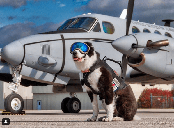 runway strike dogs birds airport aviation - 4300805