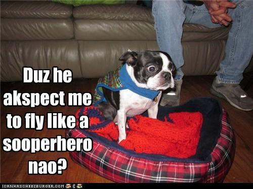 afraid,boston terrier,cape,confused,costume,expectations,fear,flying,superhero