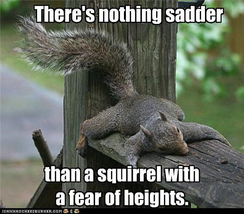 There's nothing sadder than a squirrel with a fear of heights.