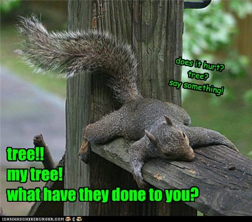caption,captioned,devastated,fence,question,squirrel,tree,upset,what have they done