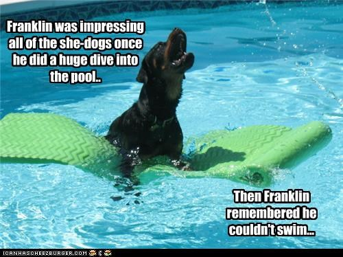 afraid,cant-swim,dive,fear,flailing,floating,freaking out,impressing,ladies,pool,rottweiler,showing off,swimming