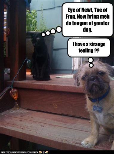 Eye of Newt, Toe of Frog, Now bring meh da tongue of yonder dog. I have a strange feeling ??