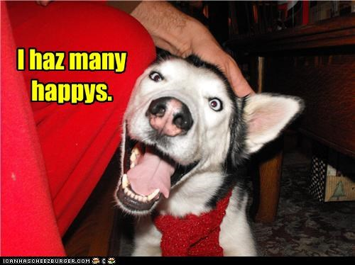 excited happies happy husky i has many smiling
