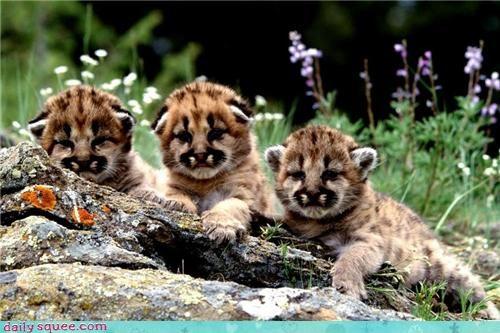 cat cub cute kitten - 4301181696