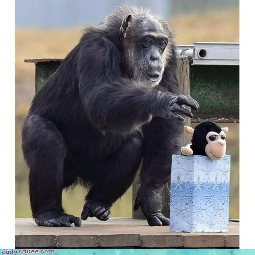 acting like animals chimpanzee cuddliness cuddling excited fluff George happy pleased present speechless squee thank you thankful - 4301238272