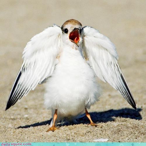 acting like animals angel angry bird disrespect hark the herald angels sing indignant lyrics song unhappy upset - 4301238784