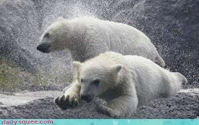 acting like animals capes costume heroes investment pleading please polar bear polar bears rings superheroes vigilante wonder twins - 4301240832