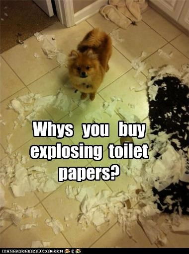 Whys you buy explosing toilet papers?