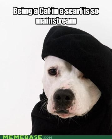 animemes beret dogs hipster Hipster Kitty mainstream - 4301711616