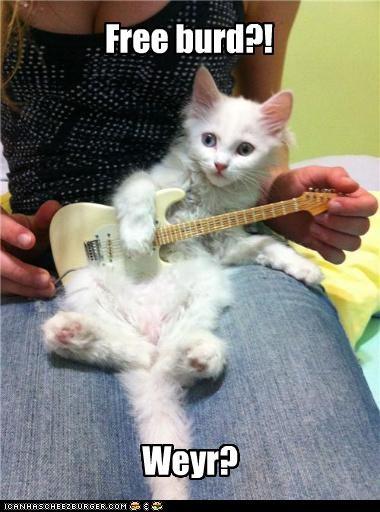 caption captioned free bird guitar lynard skynard Music musician - 4301969664