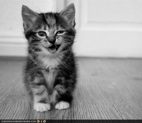 black and white,cyoot kitteh of teh day,kitten,snarl