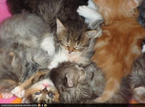 cyoot kitteh of teh day lots pile sleeping so many cats - 4302003456
