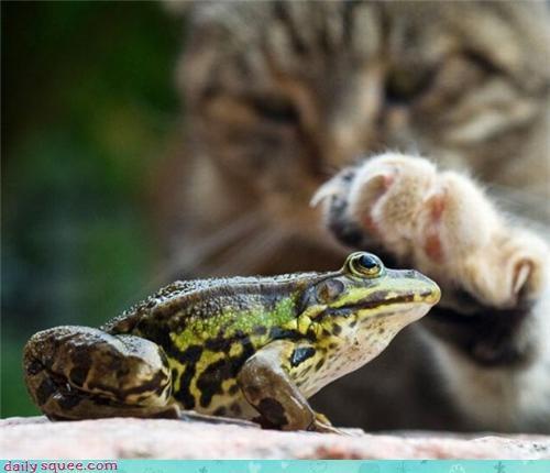 boop,cat,frog,toad