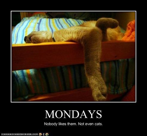 MONDAYS Nobody likes them. Not even cats.
