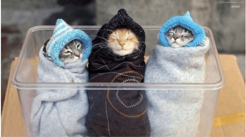 a cute list of animals wrapped in blankets