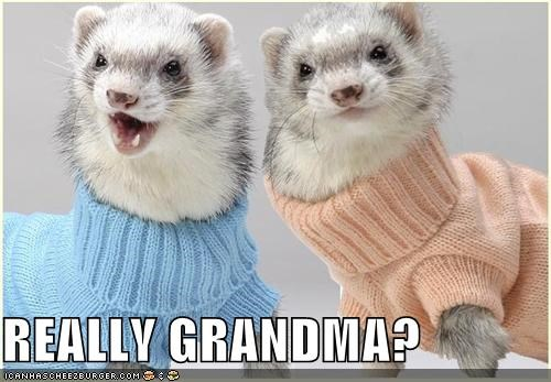 christmas,critters,ferrets,grandma,really,sweaters
