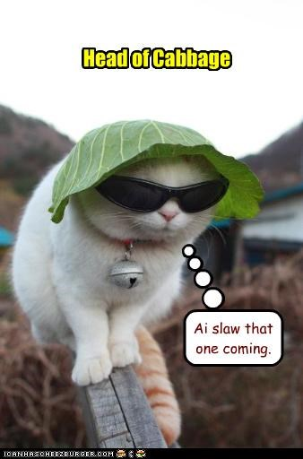cabbage,caption,captioned,head,lettuce,pun,slaw,sunglasses