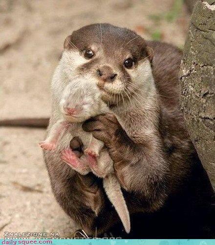 baby cute mama otter sweet - 4302799616