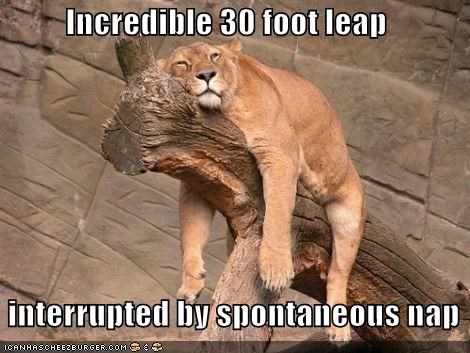 branch caption captioned epic FAIL interruption jump leap log nap ouch spontaneous tired - 4302885376