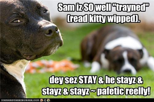 """Sam iz SO well """"trayned"""" (read kitty wipped). dey sez STAY & he stayz & stayz & stayz ~ pafetic reelly!"""
