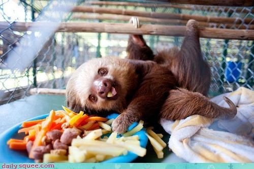claws glutton sloth snacks tongue veggies - 4303097088