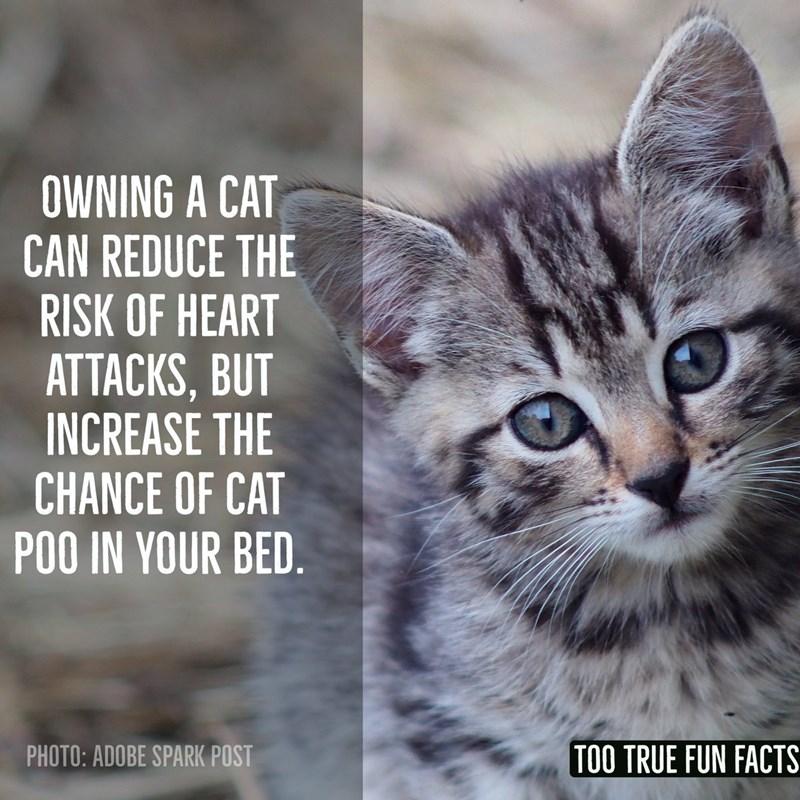 animal fun facts
