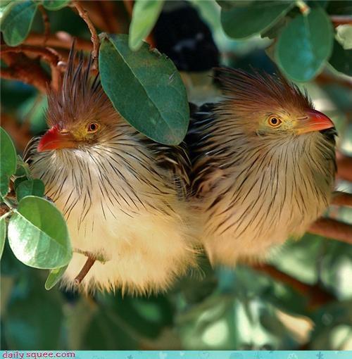 bird huh whatsit whatsit wednesday - 4303602688