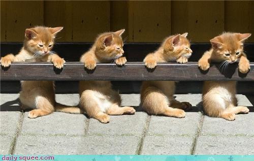 cute kitten - 4303628288
