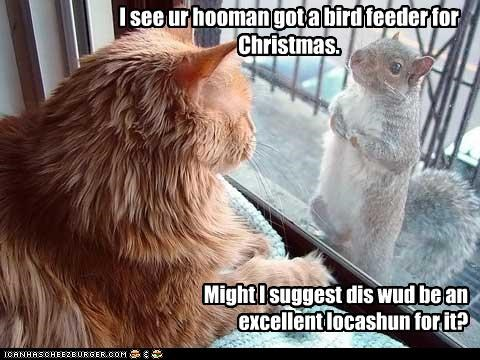 bird feeder,caption,captioned,christmas,location,present,squirrel,suggestion
