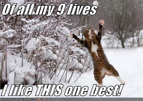 attack,caption,captioned,catch,excited,happy,nine lives,playing,snow,snowball