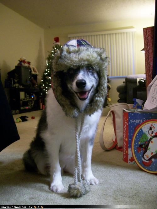 australian shepherd bring it on cozy dressed up hat prepared readiness ready themed goggie week warm winter