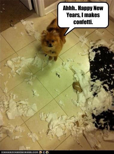 caught,confetti,crime,excuse,explanation,Hall of Fame,happy new years,new years,pomeranian,trouble,dogs
