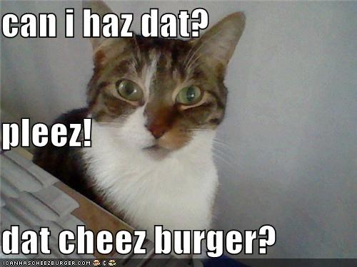 Cheezburger Image 4304271616