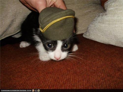 black and white,cyoot kitteh of teh day,get it off,hat,shy